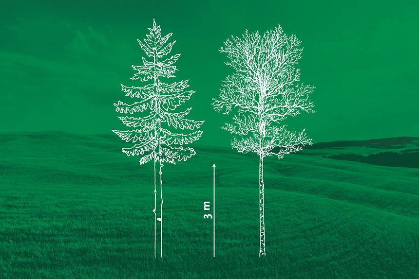Kasvavate puude laasimine. Vooremaa Metsaühistu